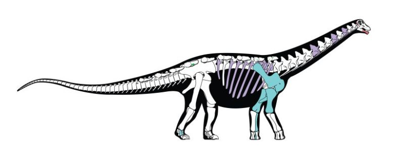 Mansourasaurus Skeletal Construction